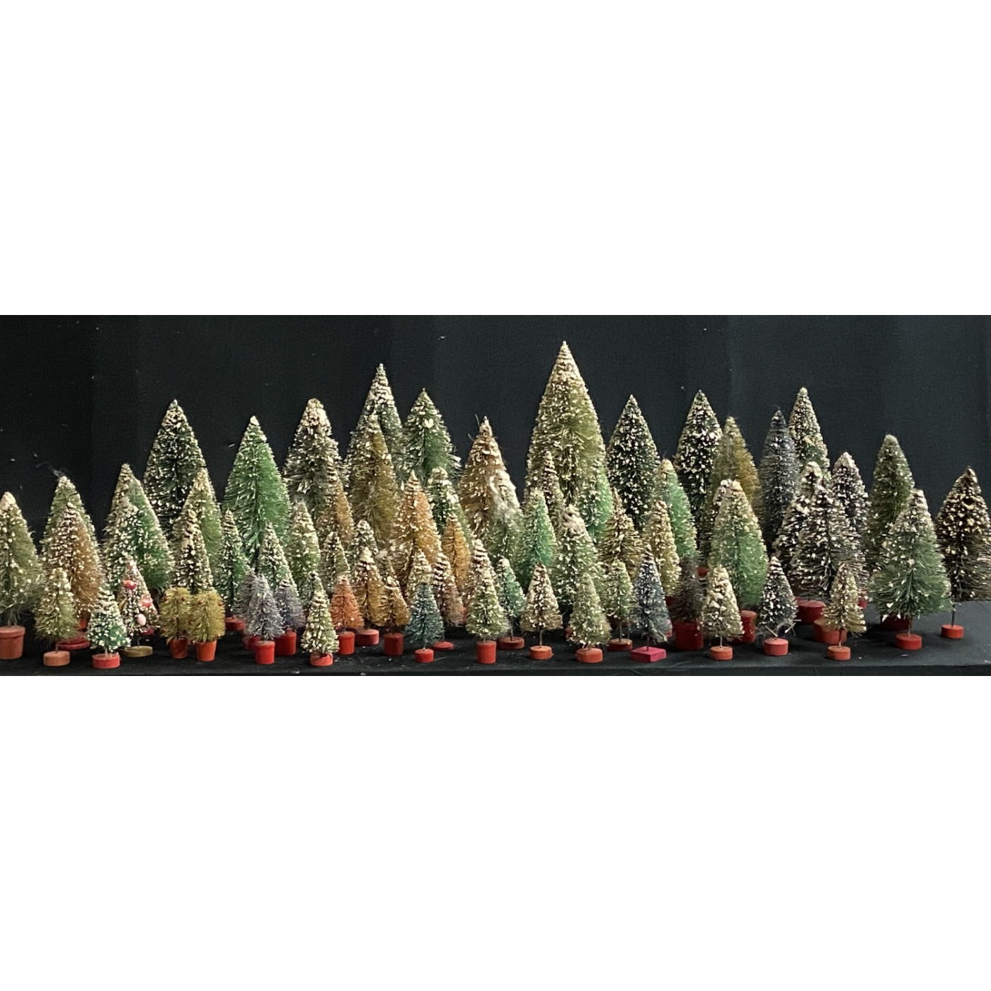 Bottle Brush Tree Collection